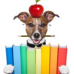photo of jack russel terrier wearing glasses, with an apple on his head and a pencil in his mouth holding 8 brightly colored books between his paws