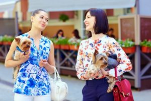 Two women having a friendly conversation and holding small dogs.