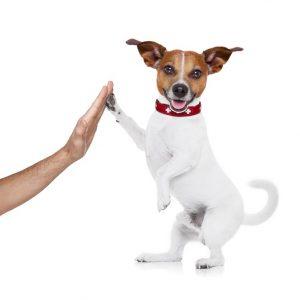 dog an owner success