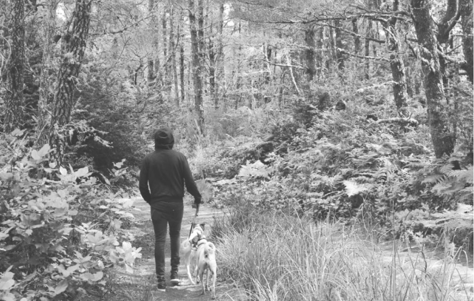 person walking dog on leash in woods