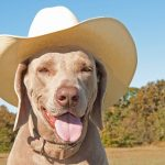 Picture of dog wearing a cowboy hat