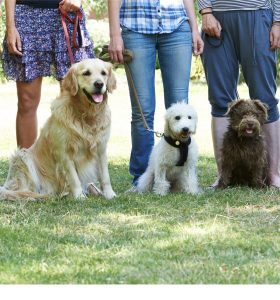 group dog training open enrollment