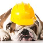 Picture of bull dog laying down wearing a construction hat