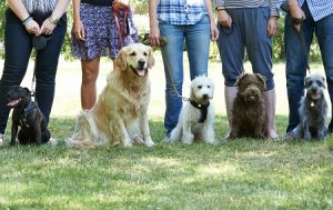 group dog classes