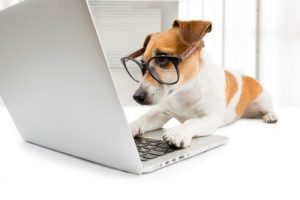 Jack russell terrier dog wearing glasses appearing to work on a laptop computer