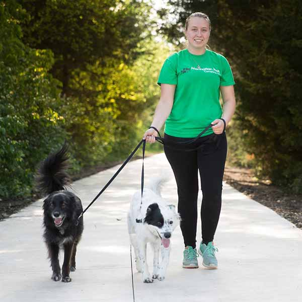 Everything you need to know to walk dogs safely and with confidence