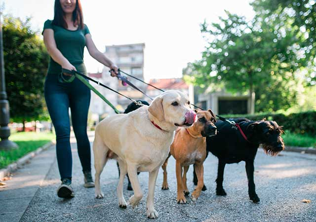 Photo of woman walking three dogs on leash in park like setting