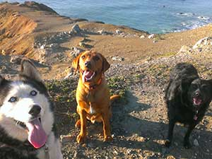 Photo of three dogs at the ocean