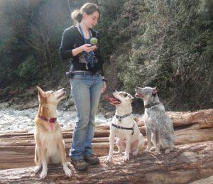 safe off leash dogs