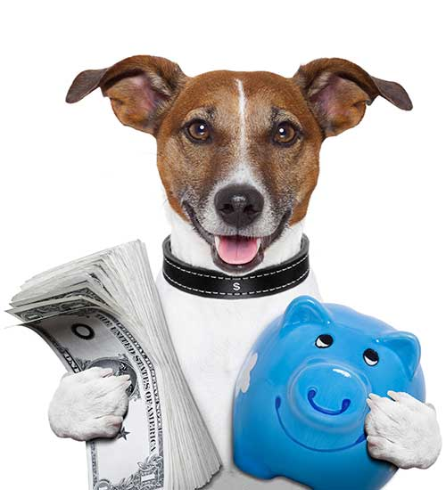 Picture of Jack Russel terrier holding a stack of cash in one paw and a piggy bank in the other.