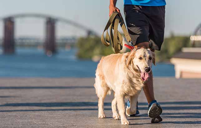 Photo of man walking a golden retriever on leash by the water