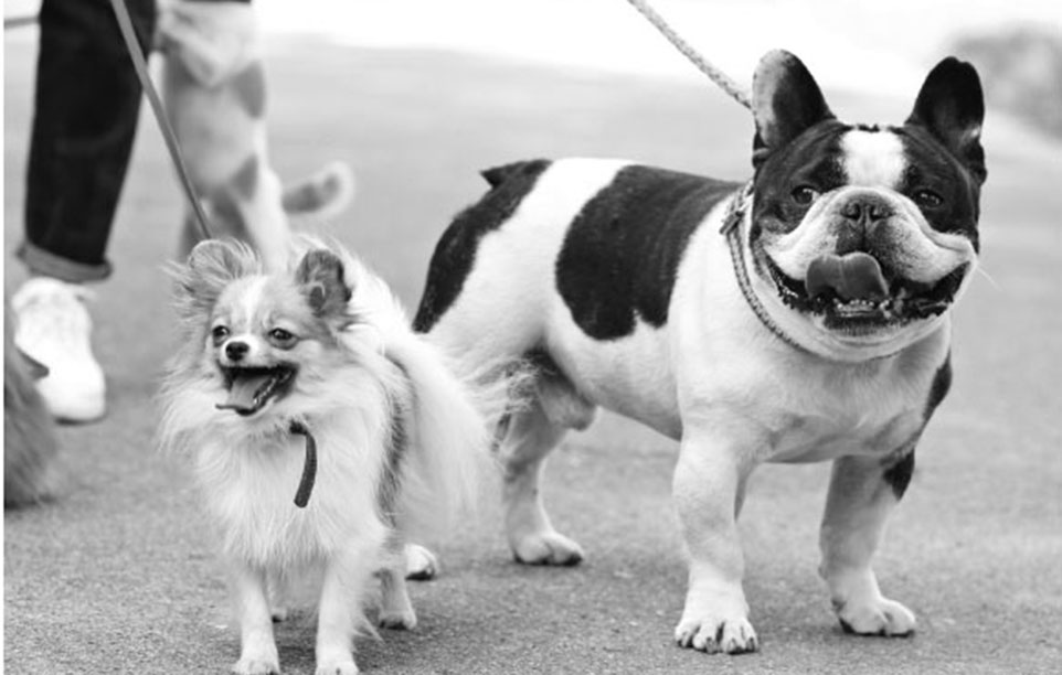 two small dogs on leash